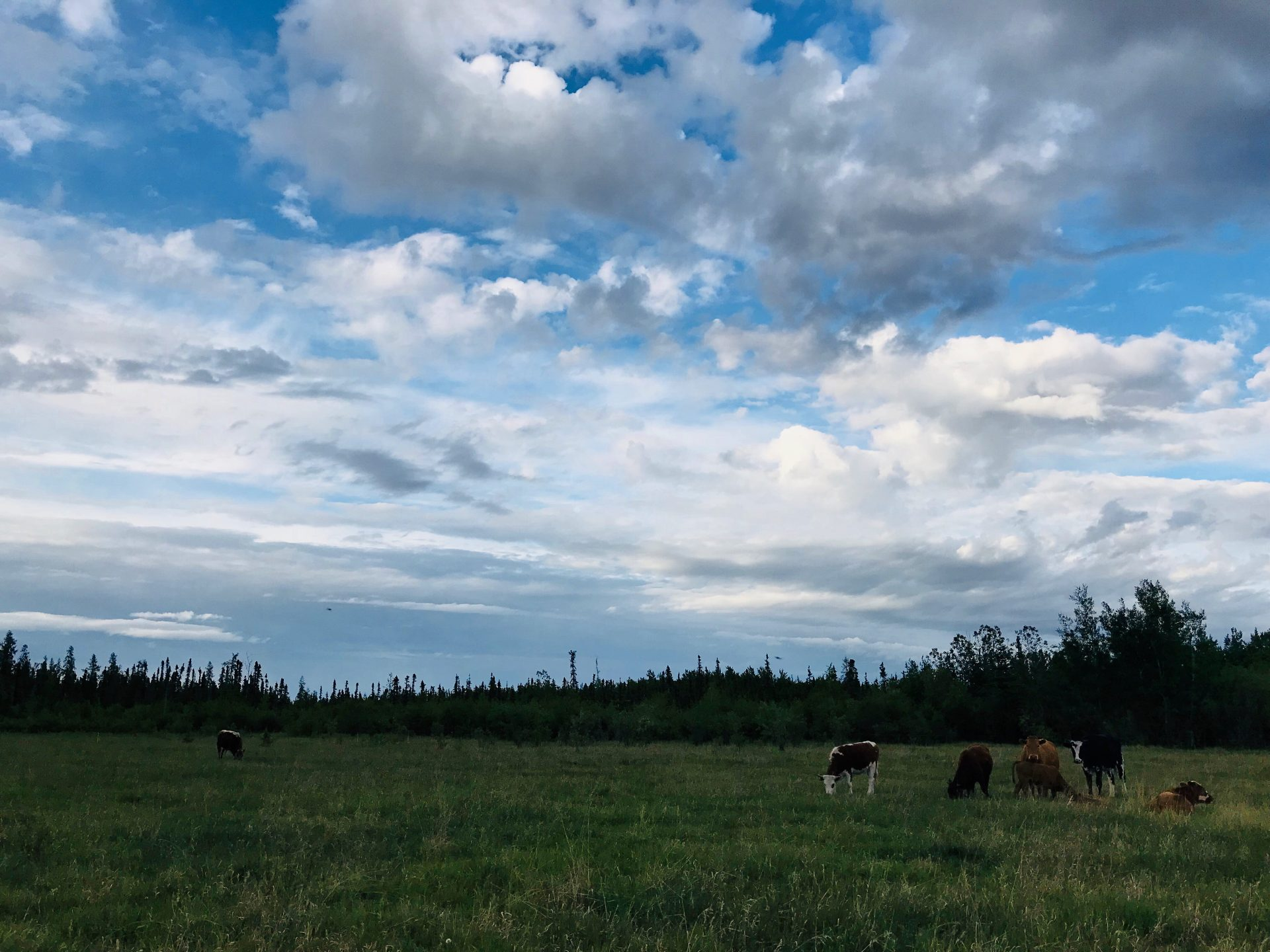 Whiskey Creek Ranch - east pasture